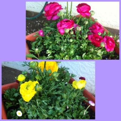 frontyardflowers